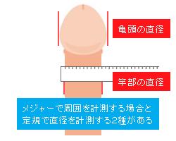 ペニスの太さ(周囲)の測り方